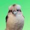 Avatar of Birds of Oz 🇦🇺