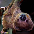 Avatar of Mr Jingles the Sloth
