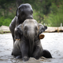 Avatar of Elephant Jungle Sanctuary Thailand