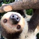 Avatar of Lola the Sloth