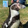 Avatar of Monty from Santa Barbara Zoo