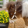 Avatar of R&R Ranch Miniature Horse Sanctuary