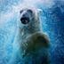 Avatar of Nora the Polar Bear