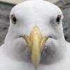 Avatar of Steven the seagull