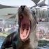 Avatar of Aquarium of the Pacific Seals/Sea Lions