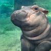 Avatar of Fiona the Hippo