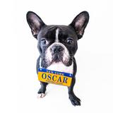 Avatar of Oscar The Frenchie