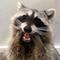 Avatar of Tito The Raccoon