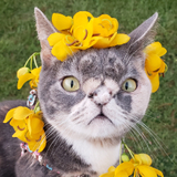 Avatar of Willow The Beautiful Cat