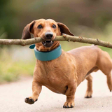 Avatar of Bosco and his big stick
