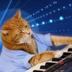 Avatar of Keyboard Cat
