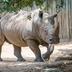 Avatar of Rhinos at Houston Zoo