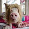 Avatar of Esther the Wonder Pig