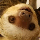 Avatar of Dunkin the Two Toed Sloth