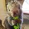 Avatar of Rico The Porcupine