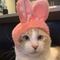 Avatar of Panko Cat