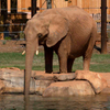 Avatar of Kelly the African Elephant