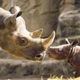 Avatar of Rhinos