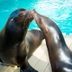 Avatar of Sea Lions at Houston Zoo