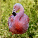 Avatar of Flamingos at BREC's Baton Rouge Zoo