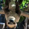 Avatar of Fernando the Sloth